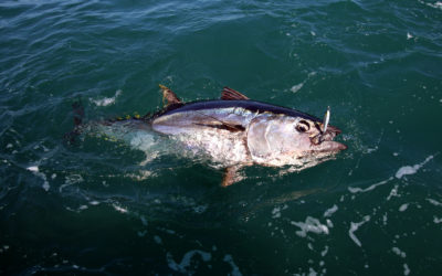 Pêche du thon : 8 techniques à expérimenter !
