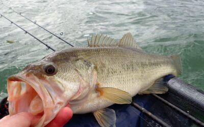 10 conseils pour pêcher le Black bass