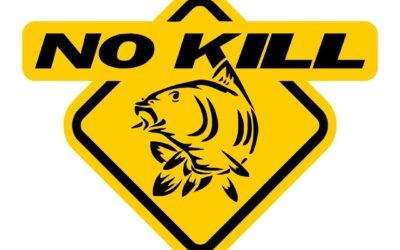 Pêche en No-Kill : Quelles-sont les bonnes pratiques ?